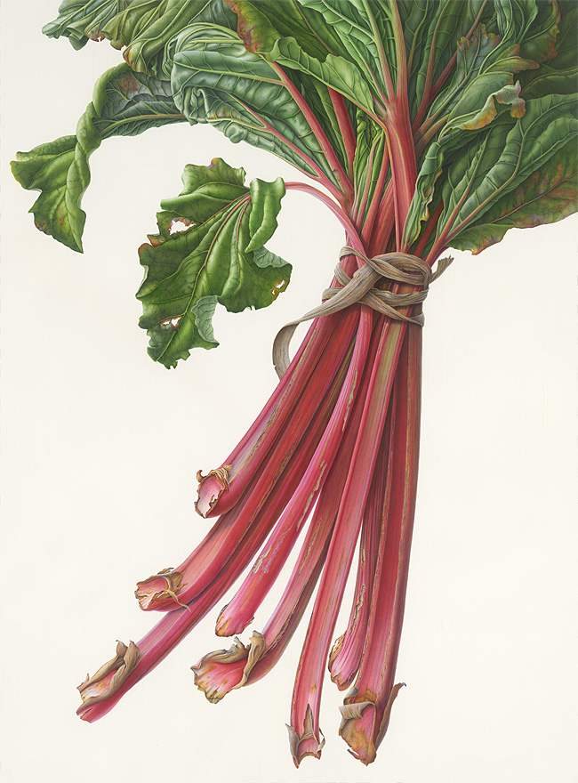 Bunch of Rhubarb
